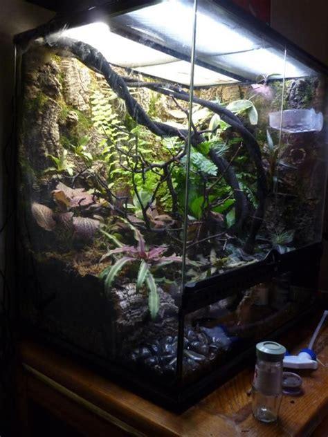 xx exo terra cresties pinterest  geckos