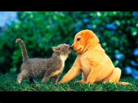 puppy compilation cats meeting puppies for the time compilation funnycat tv