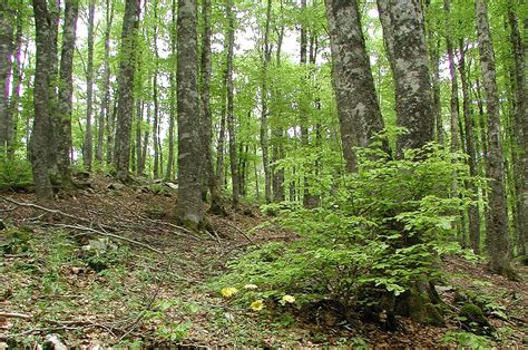 european trees minimum requirements for genetic conservation units of
