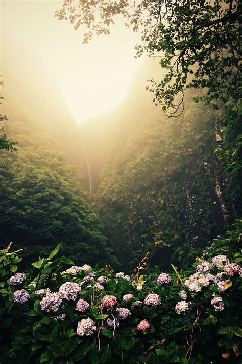 wallpaper sunlight landscape forest nature portrait