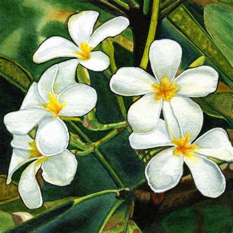 plumeria painting frangipani tree flowers painting by sandi howell