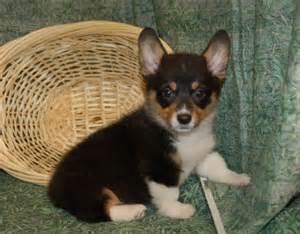 Dog breeds pictures of different dog breeds complete list of dog