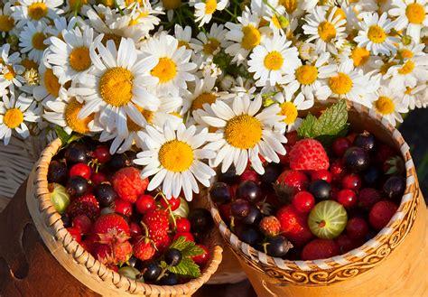 imagenes de flores y frutas fondos de pantalla bodeg 243 n frutas fresas ribes matricaria