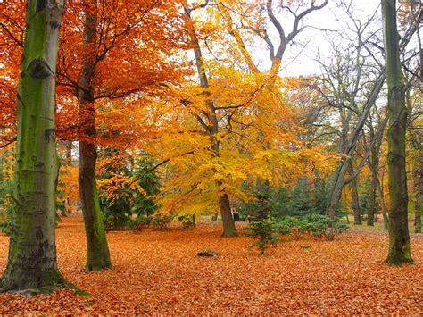 Commercial Park Bench by Arbre Automne Banc Feuilles Parc Jardin T 233 L 233 Charger Des