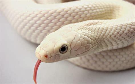 film siluman ular cantik unik gadis cantik ini dijuluki siluman ular di china