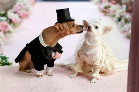film up hond all list of different dogs breeds wedding dresses for dogs