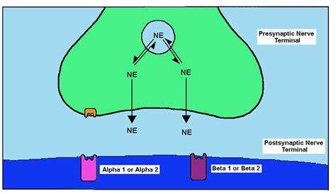 Detox Epinephrine by The Pharmacology Of Adrenergic