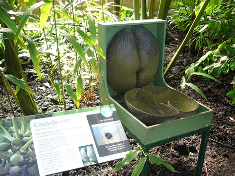 largest botanical garden in the world botanical gardens kew the largest nut in the world