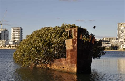 shipwrecks  homebush bay history council   south wales
