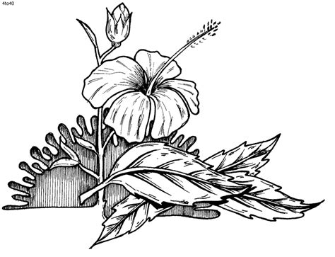 Coloring Book Hibiscus Page Picture To Pin On Pinterest Hibiscus Coloring Pages