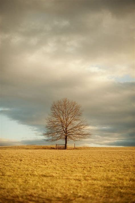 Landscape Photography Lone Tree In Field Sky Photograph Lone Landscaping