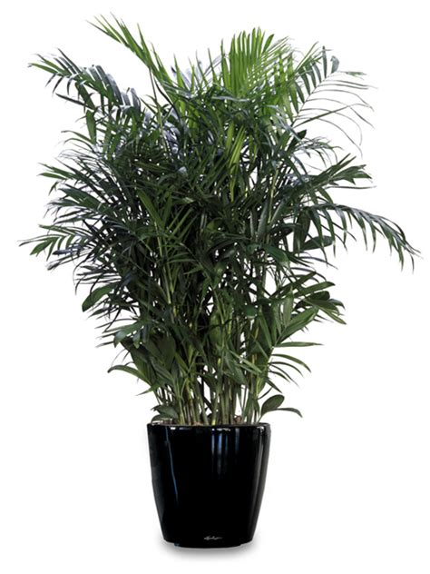 no sun plants indoor anita s health blog 9 houseplants that clean the air