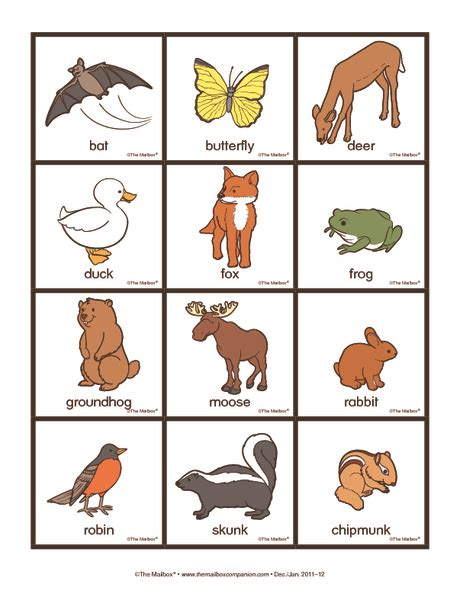 printable animal sorting cards can use to sort nocturnal diurnal animals nocturnal