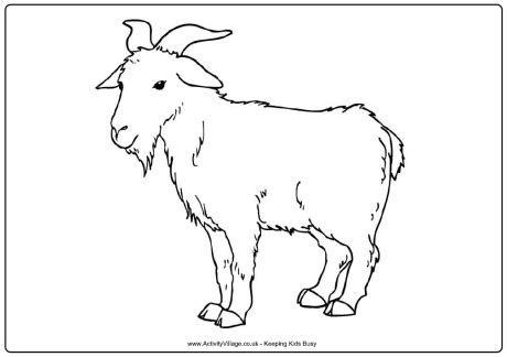 new year goat colouring sheets goat colouring page