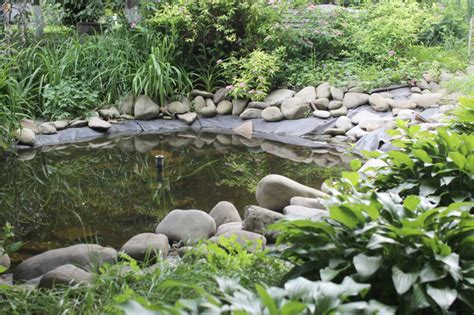 backyard ponds cleaning and maintenance blain s farm