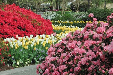 For Women Girls Night Out Ideas Things For Women To Do Dallas Flower Garden