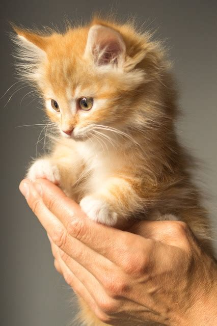 kitten cute cat  photo  pixabay