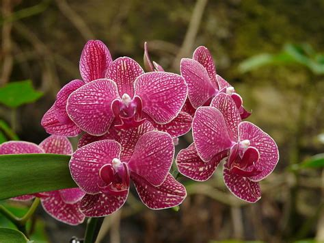 imagenes de rosas japonesas 10 mejores flores japonesas 1001 consejos
