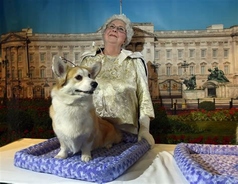 queen elizabeth dogs westminster dog show photos and images abc news