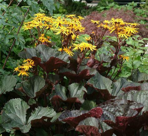 super natural landscapes large perennials for shade gardens