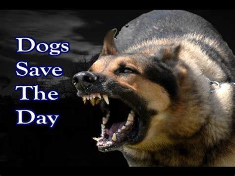anatolian shepherd puppies craigslist trapped at freddy s five nights at freddy s fan fiction creepypasta funnydog tv