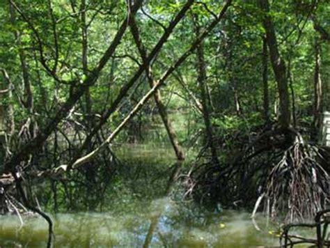 Paya Hijau tumbuhan semula jadi dan hidupan liar hutan paya air masin