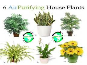 six air purifying house plants increase your lifestyle