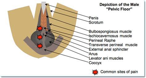 Pelvic Floor Disorder Symptoms by Nerve Pelvic Floor Nerve