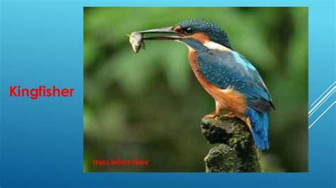 Birds Of Bangladesh Essay by Class Six 1st Paper Class 6 Unit 12 Birds Of Bangladesh