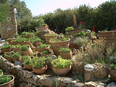 jardin de plantes aromatiques mes debuts de jardiniere the cybione