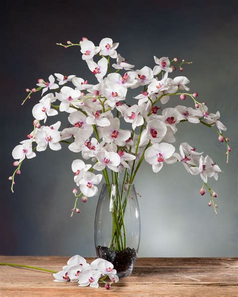 Stb159 Fu Zoom Jpg Phalaenopsis Orchid Silk Flower Stems For Casual