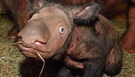 rarest in the world animals in the world pictures to pin on pinsdaddy