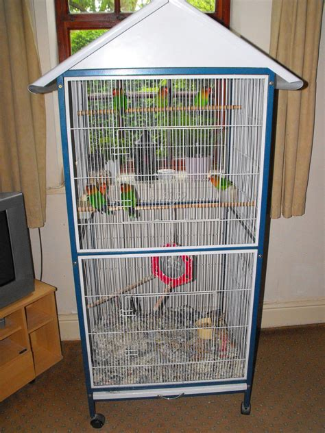 7 peach faced lovebirds and cage for sale oldham