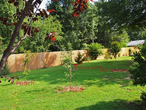 backyard apple orchard an orchard big or small is a lovely idea a cultivated nest