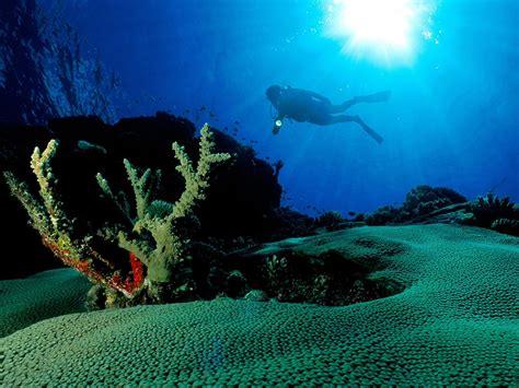 underwater wallpapers picgifs