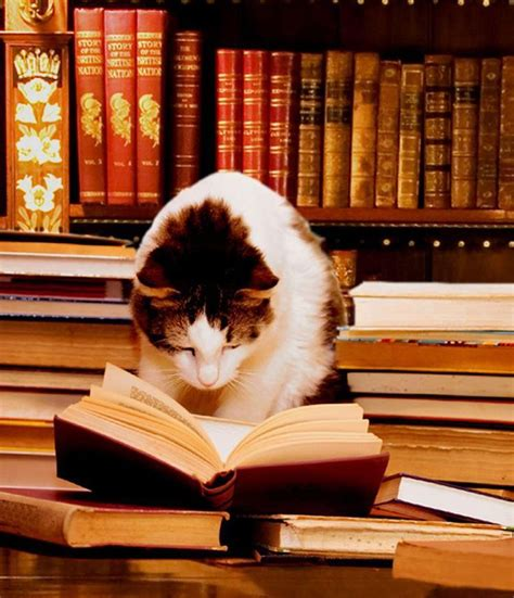 how to live like your cat books 17 best images about library cats on