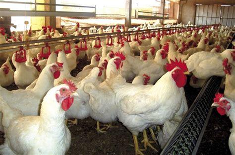 aumento salarial avicola peon avicola escala salarial autos post