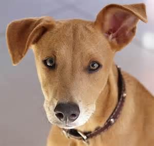 photo gratuite chien jeune chien t 234 te image gratuite