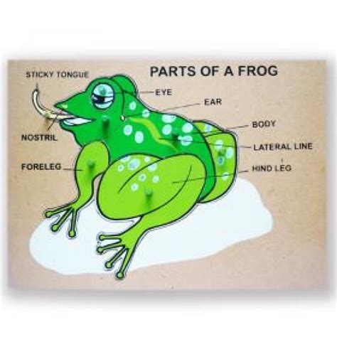 02 frog mouth parts bioteam notebook