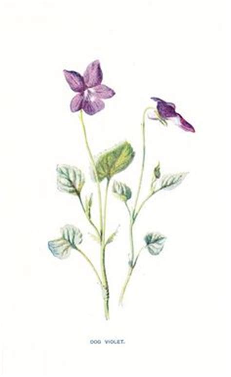 violet on pinterest floral tattoos violets and violet