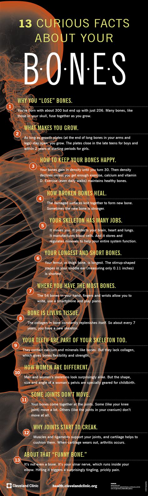 13 strange and interesting facts about your bones infographic interesting facts