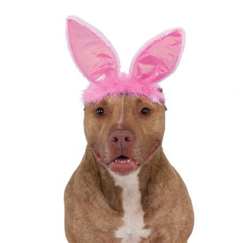 bunny ears for dogs scooby doo puppy easter bunny rabbit costume plush stuffed beds and costumes