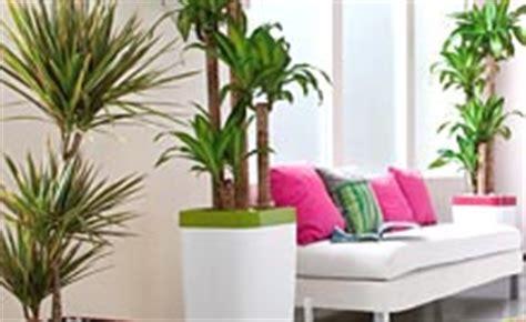 Impressionnant Plante D Interieur Sans Lumiere #7: Plantes-vertes-interieur-m.jpg