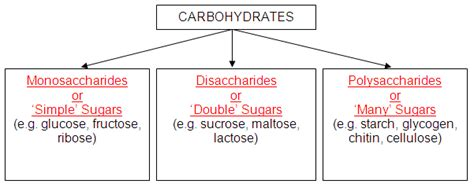 carbohydrates elements ratio elements ratio for carbohydrates ketogenicdietpdf