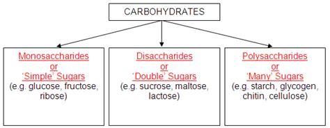 carbohydrates biology organic macromolecules biology is