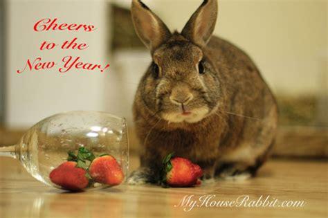 new year 2015 for the rabbit rabbit photos bunny bunny