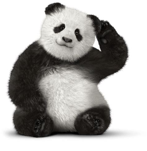 giant panda bear red panda telus customer service bear png