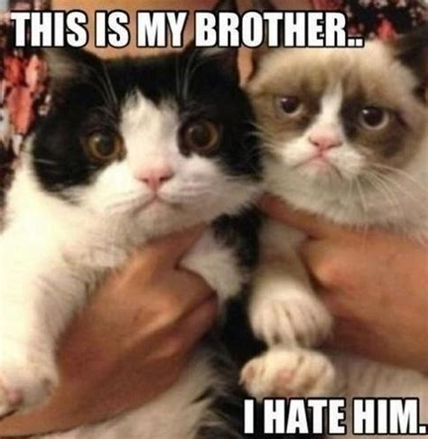 I Love My Brother Meme - ultimate grumpy cat compilation 17 pics