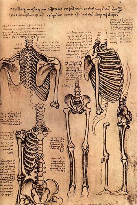 leonardo da vinci bones therealdegree