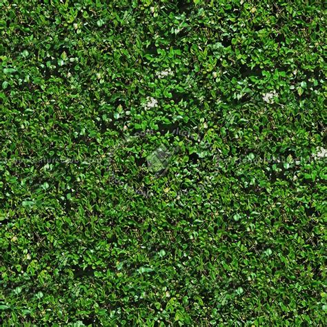 How To Clean Flat Paint Walls Green Hedge Texture Seamless 13095